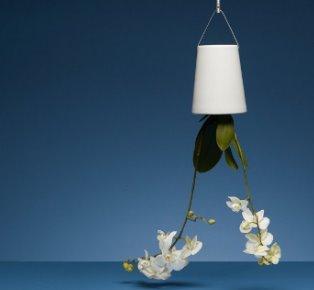 反地心吸力的設計 用盡天花板空間的盆栽設計